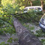 На Рышкановке упавшее дерево повредило две машины (ФОТО, ВИДЕО)