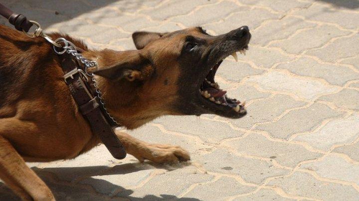11-летний мальчик, которого укусила собака, скончался в больнице
