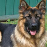Стали известны подробности трагедии в Яловенах, где от укуса собаки погиб ребёнок