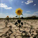 """""""Жёлтый код"""" в связи с гидрологической засухой продлён до 20 августа"""