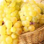 Молдова вошла в двадцатку мировых производителей благодаря рекордному урожаю винограда