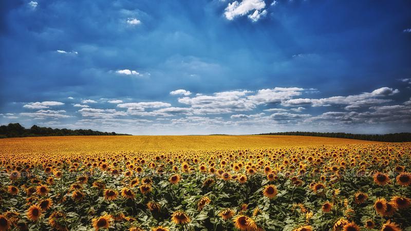 """""""Жёлтый код"""" метеоопасности в связи с жарой и засухой продолжается"""