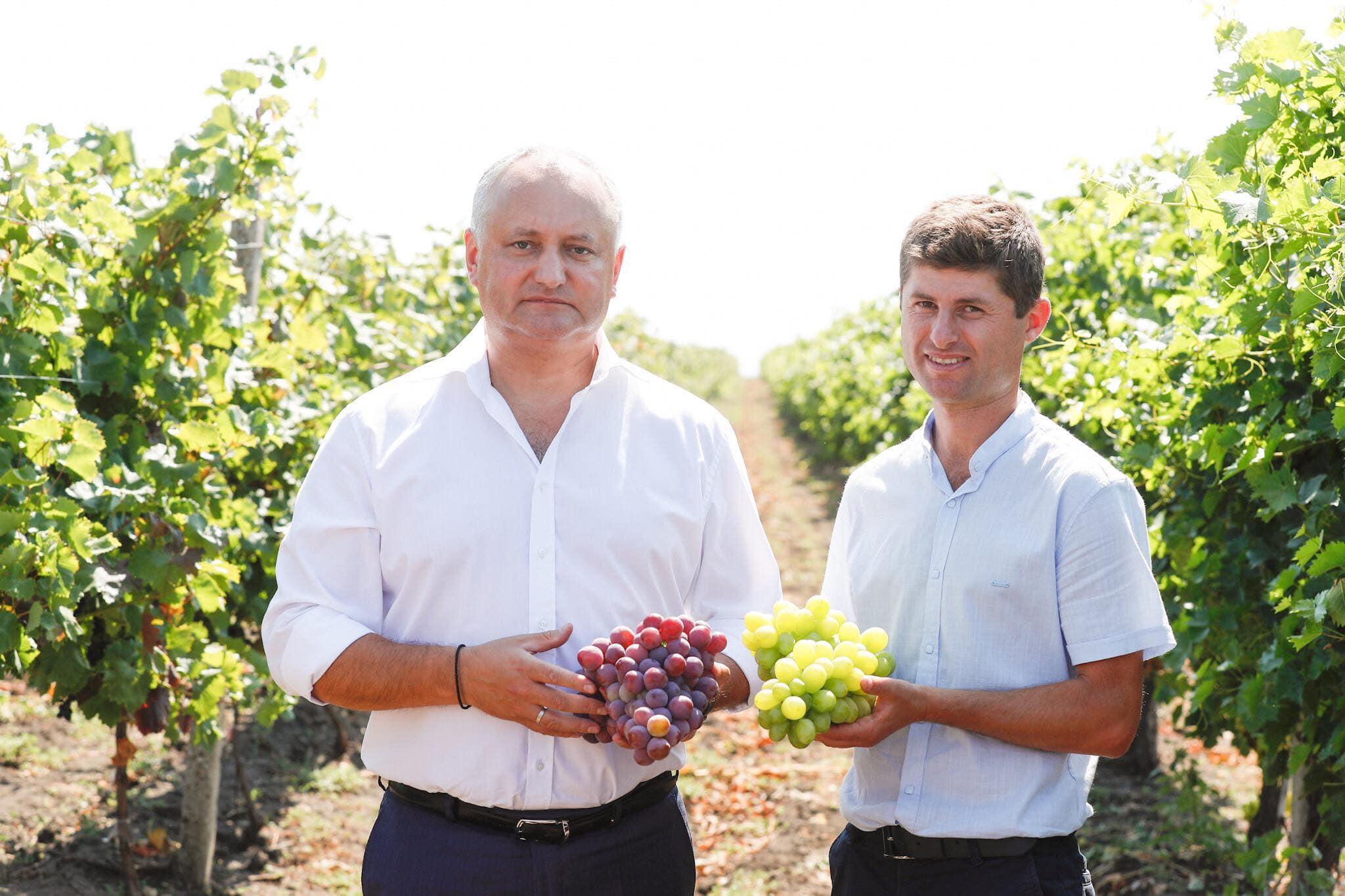 Додон: Убежден, что у сельского хозяйства Молдовы есть будущее! (ФОТО, ВИДЕО)
