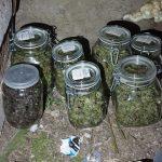 Бизнес на наркотиках: в Молдове обезврежена преступная группировка, изъята «запрещёнка» на 1 млн леев (ФОТО)