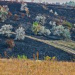 """Пожар в заповеднике """"Orheiul Vechi"""" уничтожил около 40 га растительности (ФОТО)"""