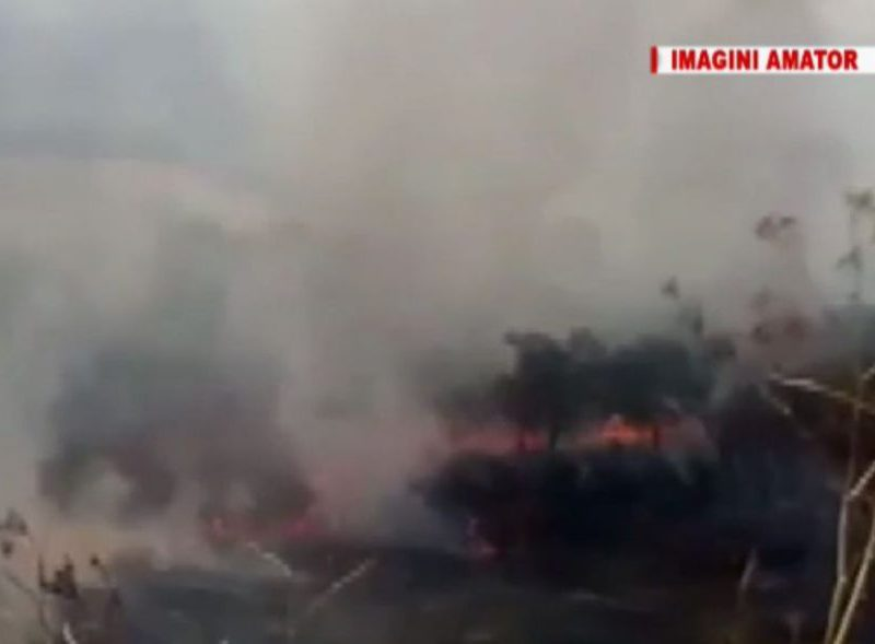В Резинском районе потушили лесной пожар