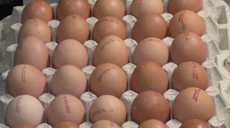 Опечатка на фабрике едва не запятнала репутацию: найденные в детсадах просроченные яйца оказались хорошими (ВИДЕО)