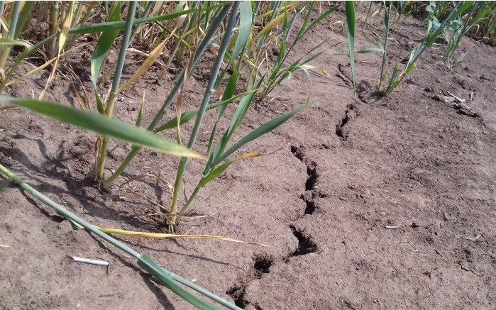Пострадавшие от засухи и града сельхозпроизводители могут подать заявку на получение компенсации