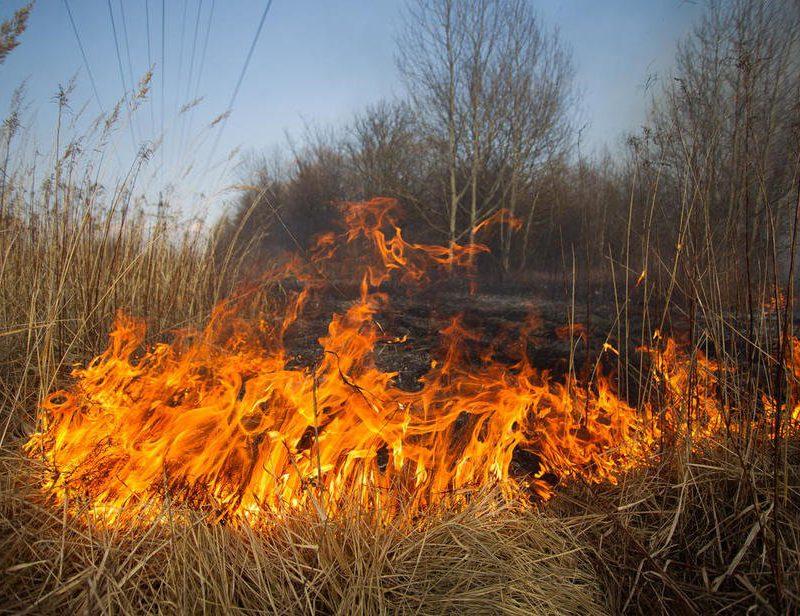 """Опасность пожаров сохраняется: синоптики продлили """"жёлтый код"""""""