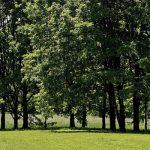 В Гагаузии наблюдается тенденция увеличения площади лесного фонда