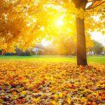 Синоптики прогнозируют тёплый конец сентября