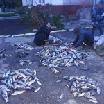 200 кг рыбы конфисковали у браконьеров в Кагуле (ФОТО)