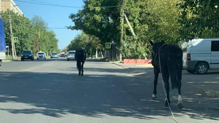 И такое случается: в Кишинёве запечатлели двух прогуливавшихся по проезжей части лошадей (ФОТО)