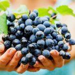 В 2019 году экспорт молдавского вина достиг рекордных объемов