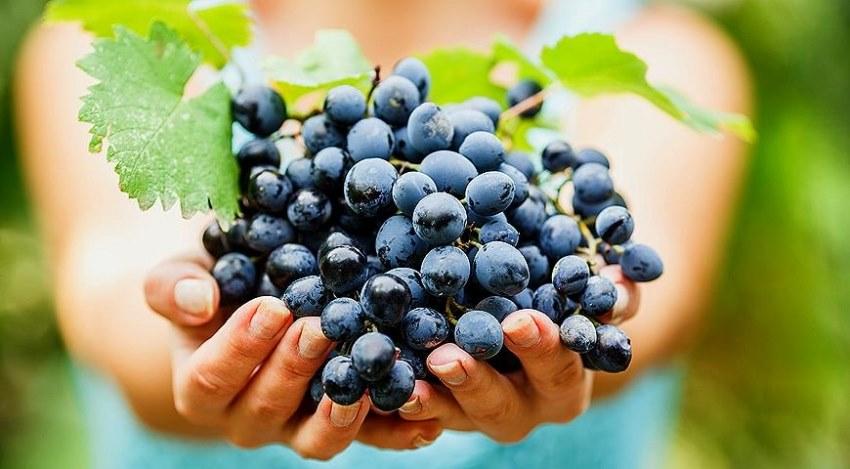 Прогноз специалистов: Молдова может побить рекорд экспорта столового винограда