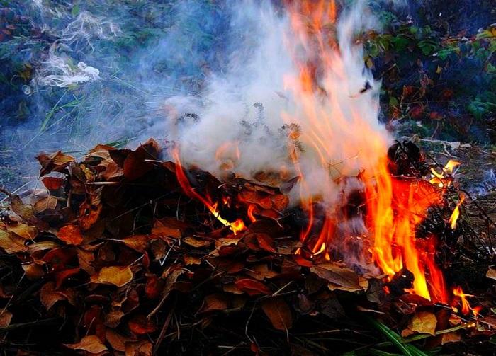 Приднестровцев предупреждают: за сжигание листвы будут штрафовать