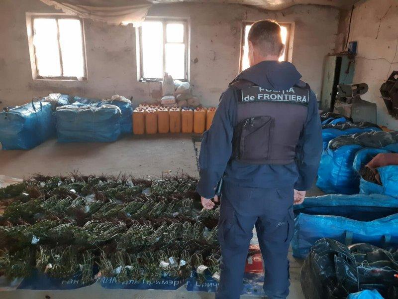 6 000 саженцев роз изъяли вблизи молдо-украинской границы (ФОТО)