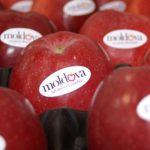 Более 100 тысяч тонн молдавских фруктов было экспортировано за рубеж в течение трёх месяцев