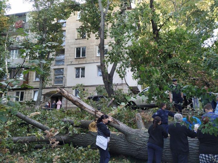 На Телецентре рухнувшее дерево повредило припаркованные авто (ФОТО)