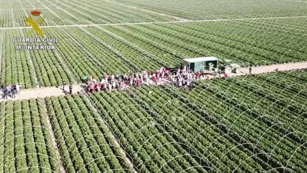 Шок: сотни человек, включая граждан Молдовы, находились в трудовом рабстве в Испании (ВИДЕО)