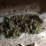 Выращивали коноплю для продажи: у двоих задержанных изъяли 8 кг марихуаны (ФОТО, ВИДЕО)