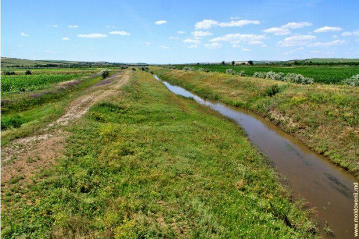 Берега рек в Молдове будут укреплены защитными лесными насаждениями