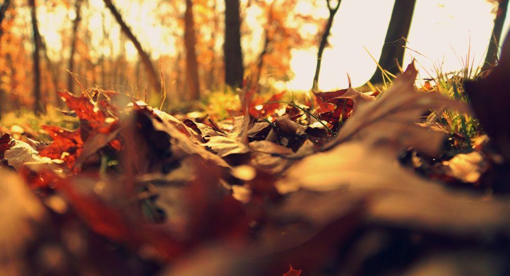 Сладкий ноябрь: тёплая погода сохранится и на следующей неделе