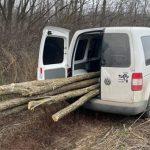 Штраф до 2,5 тысяч леев грозит жителю Хынчешт за незаконную вырубку деревьев (ФОТО)