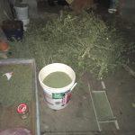 Выращивали на продажу марихуану: двоим членам банды наркоторговцев грозит до 15 лет (ФОТО, ВИДЕО)