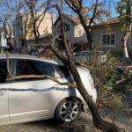 Огромная ветка рухнула на припаркованное авто в центре столицы (ФОТО)