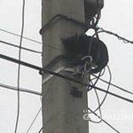 В Комрате пожарные спасли кошку, забравшуюся на столб