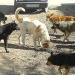 Чебан: Проблема с бродячими собаками в Кишинёве вскоре будет решена