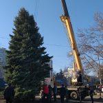 На Ботанике установили новогоднюю ёлку, а вскоре откроют праздничный городок (ФОТО)