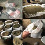 Столичные правоохранители изъяли марихуану на полмиллиона леев (ВИДЕО)