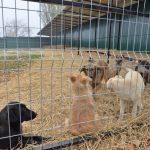 Специалисты из Кишинёва и Киева обменяются опытом по вопросам отлова бездомных собак