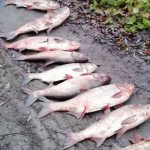 """В нескольких районах прошёл """"отлов"""" браконьеров: нарушители получили внушительные штрафы"""