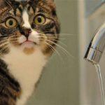 По нескольким столичным адресам будет приостановлена подача воды
