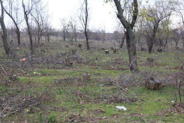 """""""Чёрные"""" лесорубы уничтожили лес в Кириет-Лунге почти на 86 тысяч леев"""