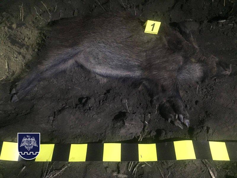 Пограничная полиция задержала двух браконьеров, подстреливших кабана