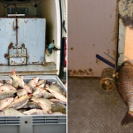Полтонны рыбы без документов обнаружили в Кишиневе: товар везли на Центральный рынок