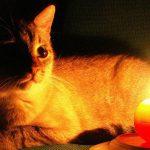 Во вторник в трёх столичных секторах не будет света