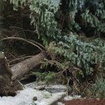 Последствия непогоды: в Тараклии ветер повалил ель и снёс крышу остановки (ФОТО)