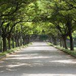 """Киронда: В Кишиневе должны быть нормальные деревья, а не """"спички"""" и накренившиеся стволы"""