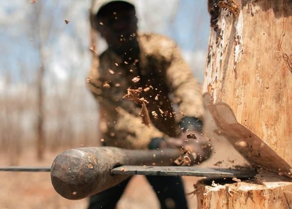 В Брянской области молдаванина осудили за 8 срубленных дубов