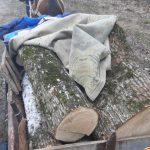 В Калараше четверо мужчин были оштрафованы за незаконную вырубку леса