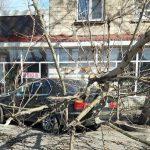 Во власти стихии: на Ботанике из-за ветра огромная ветка упала на автомобиль (ФОТО)