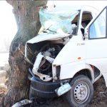 Жуткое ДТП в Фалештах: водитель на полном ходу врезался в дерево (ФОТО)