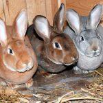 Вор украл у рыбничанки кролика и съел его: теперь ему грозит уголовная ответственность
