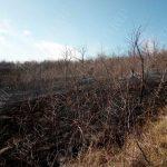 В Слободзее загорелся сухостой: очаг оперативно ликвидировали (ФОТО)