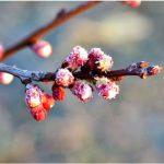 На Молдову надвигается похолодание: ожидаются ночные заморозки